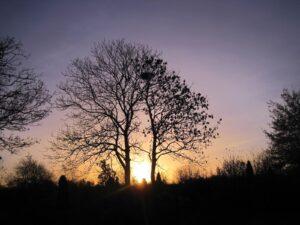 solnedgang og træer